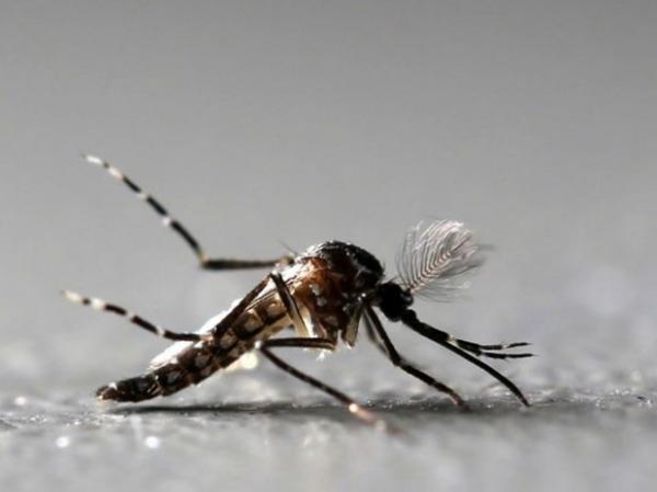Mosquito Aedes aegypti é alvo de campanha em todo país para combater dengue, chikungunya e zika.(Imagem:Paulo Whitaker/Reuters)
