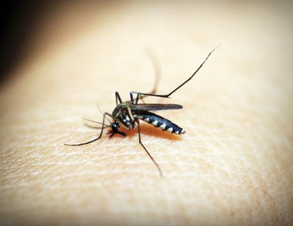 Melhor forma de combater o mosquito Aedes aegypti é se prevenindo.(Imagem:Divulgação)