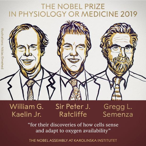 Vencedores do prêmio Nobel de Medicina deste ano: William Kaelin, Sir Peter J. Ratcliffe e Gregg Semenza.(Imagem: Reprodução/Twitter prêmio Nobel)