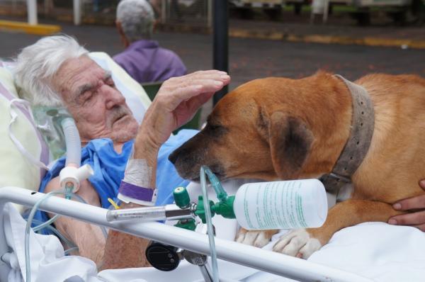 Idoso recebe visita de cão após animal sentir saudade de dono hospitalizado em Catanduva(Imagem:Divulgação/Fundação Padre Albino)