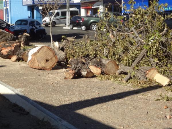 Árvore centenária é retirada do centro de Floriano.(Imagem:FlorianoNews)