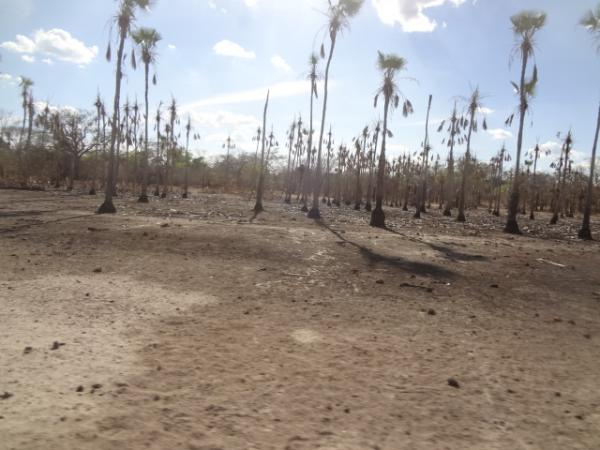 Seca mata animais na zona rural de Floriano.(Imagem:FlorianoNews)