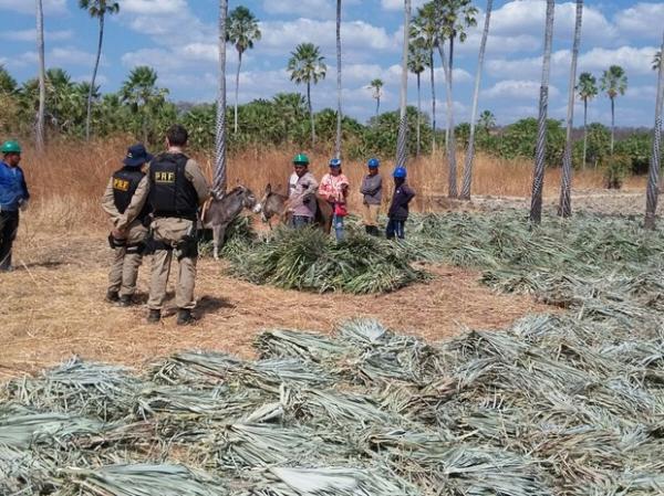 Trabalhadores foram achados em condições degradantes em municípios do Piauí.(Imagem:Divulgação/PRF)