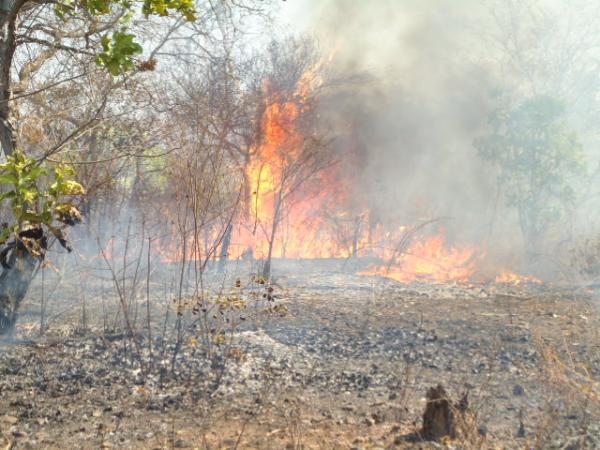 Ibama abre processo seletivo para brigada de incêndio em Floriano.(Imagem:FlorianoNews)