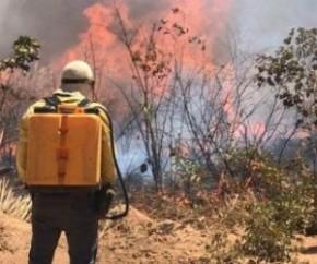 Audiência: aumento considerável de queimadas preocupa autoridades no Piauí(Imagem:Reprodução)