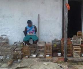 PM apreende 34 pássaros e duas pessoas são presas em flagrante.(Imagem:Cidadeverde.com)