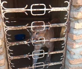 Animais vítimas de maus-tratos são resgatados no Piauí.(Imagem:Cidadeverde.com)