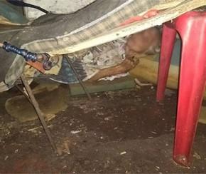 Idosa em estado debilitado é encontrada sozinha em casa na Capital.(Imagem:Reprodução/Facebook)
