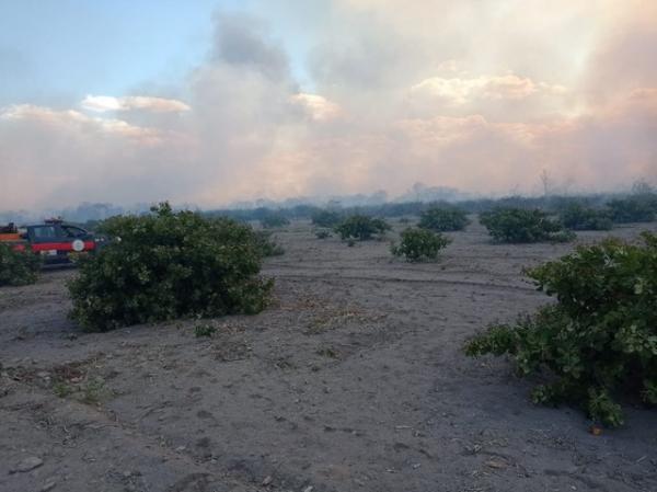 Incêndio destrói roças de caju e apiários na zona rural de Monsenhor Hipólito.(Imagem:Corpo de Bombeiros)